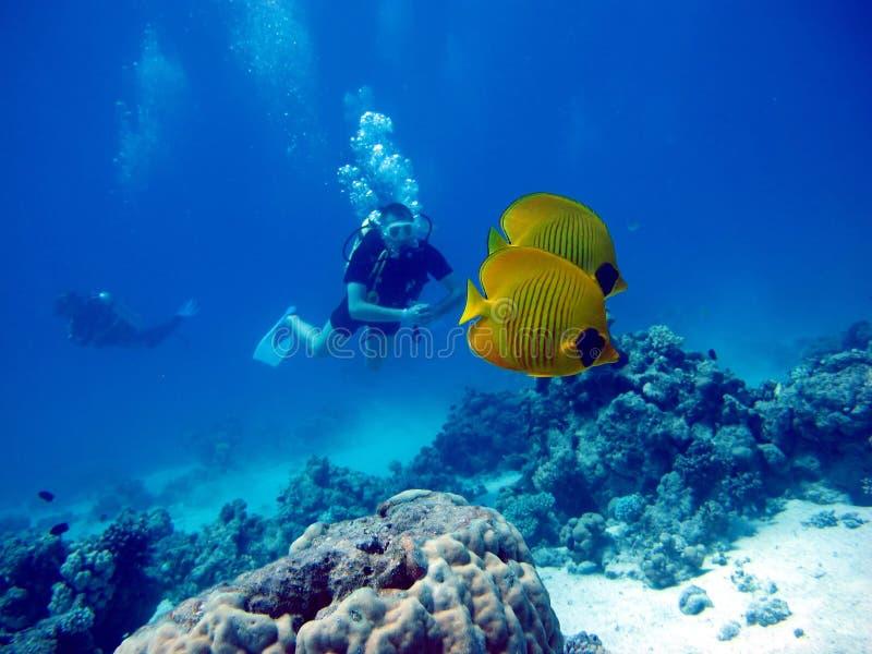 一个潜水者在红海 许多美丽的鱼 库存照片