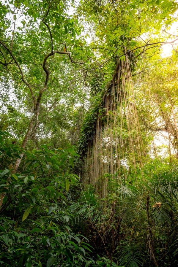 一个热带森林的看法 库存图片