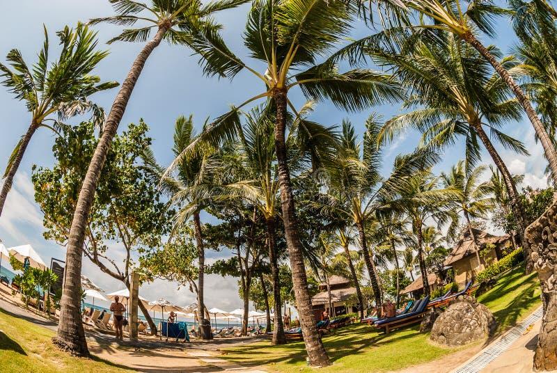 一个热带海滩的风景与很多棕榈的,高作为skysc 免版税库存照片