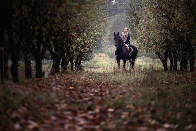 一个牛仔帽的美丽的时髦的女孩有走在秋天森林里的马的,乡村模式 免版税库存照片