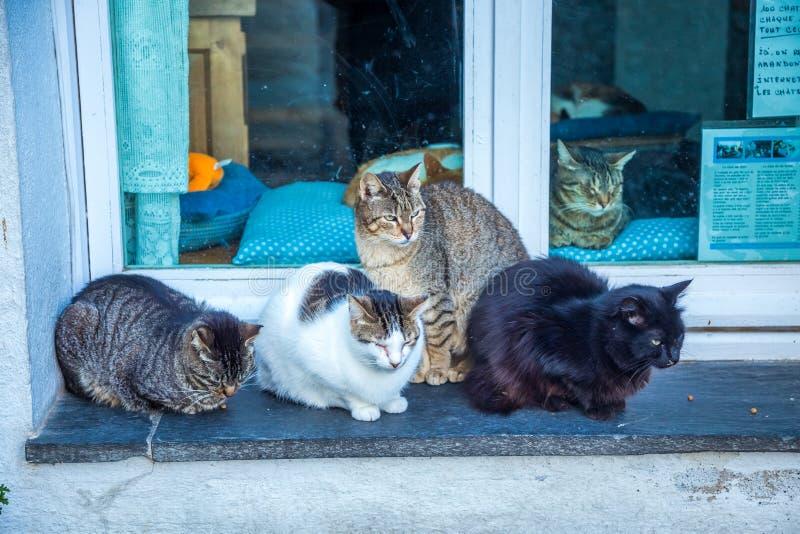 一个猫公寓房/剧场的例证有玩具和四只不同小猫的包括:暹罗语,安哥拉猫和平纹 免版税库存图片