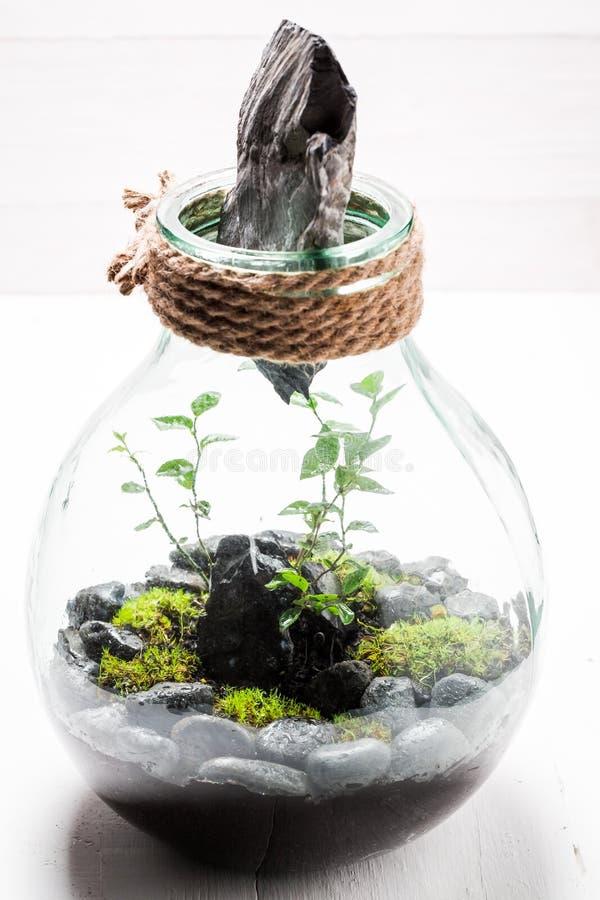 一个瓶子的惊人的绿色植物有自已生态系的 库存图片