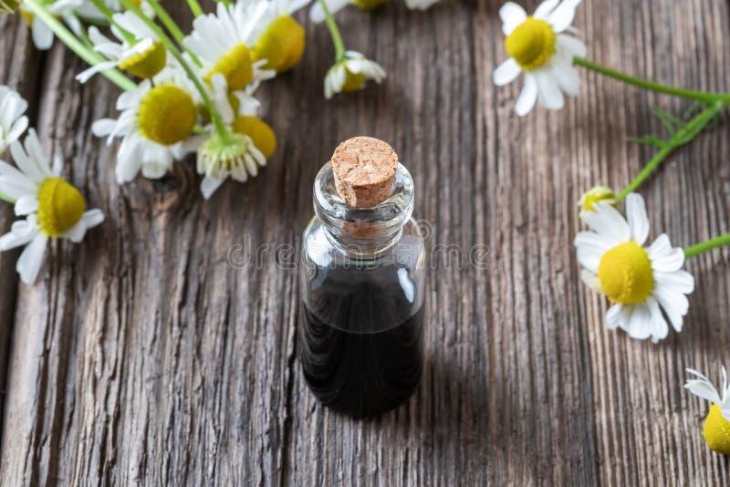 一个瓶深蓝春黄菊精油和花 免版税图库摄影
