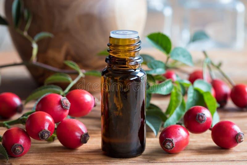 一个瓶野玫瑰果在一张木桌上的菜籽油 库存照片