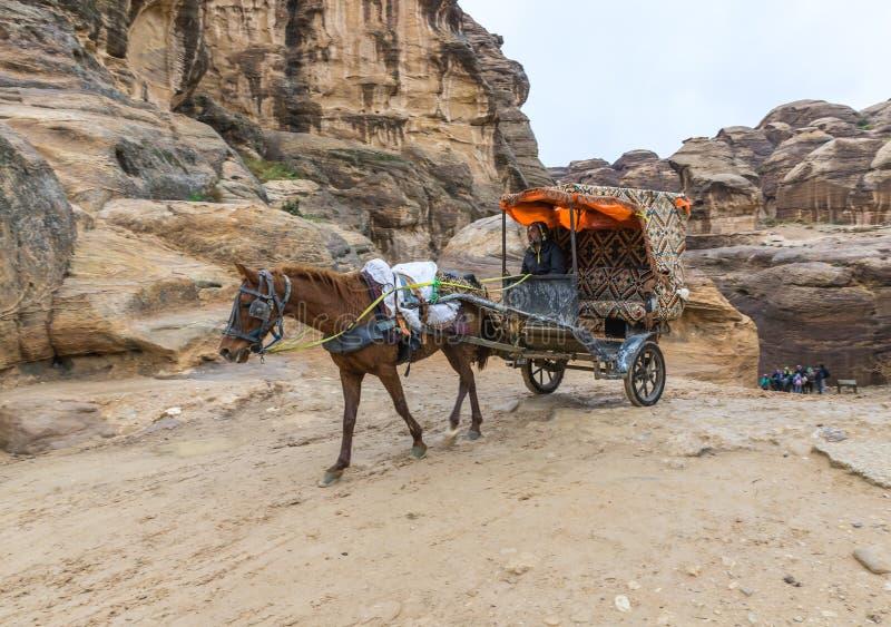 一个用马拉的支架的一个流浪者沿路导致Petra的- Nabatean王国的资本乘坐在旱谷芭蕉科市 库存图片
