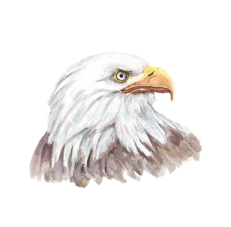 一个白色老鹰头的水彩例证有看对边的开放额嘴的 库存例证