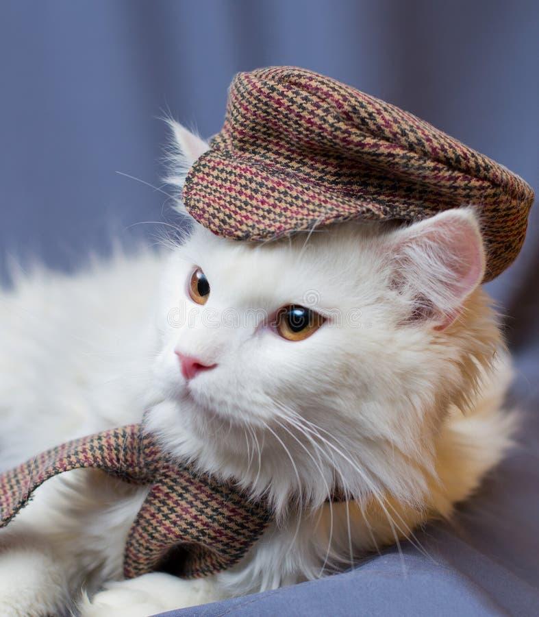 一个白蓬松猫绅士的画象盖帽和围巾的 他有琥珀色的殷勤眼睛和一个桃