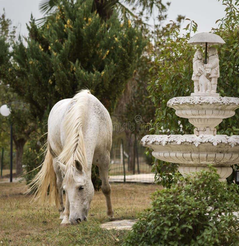 一个白马的画象在有喷泉的一个庭院里 免版税库存照片