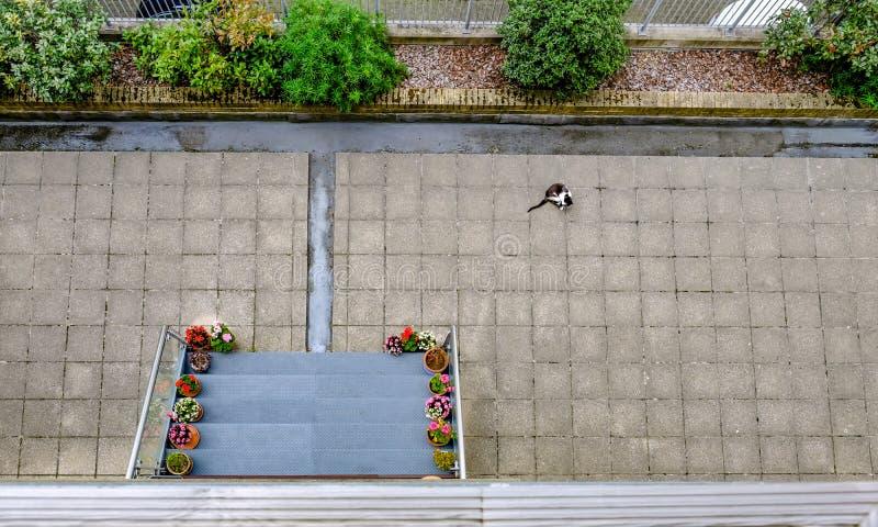一个空的露台区域的阿里埃勒视图与一只黑白猫的 图库摄影