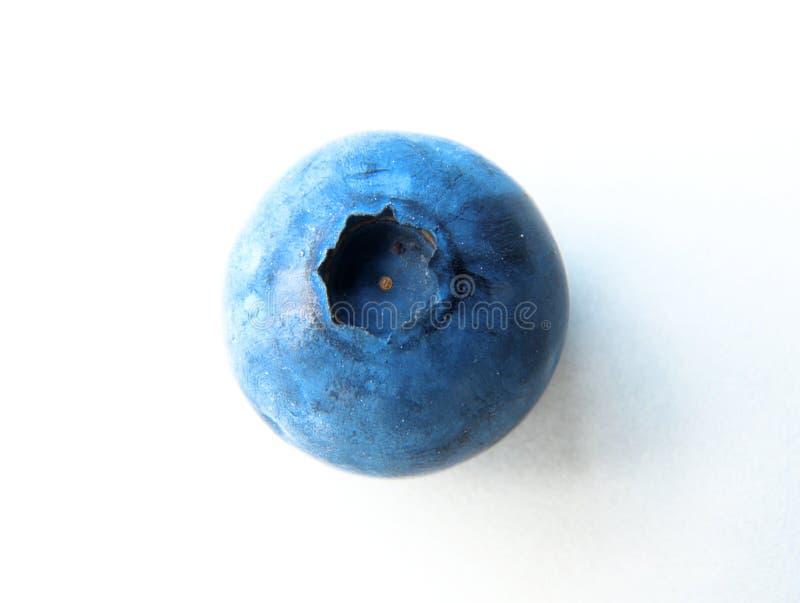 一个精美和新鲜的蓝莓特写镜头  免版税库存图片