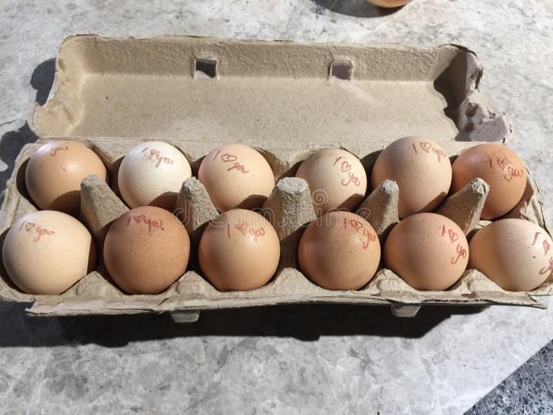 一个纸盒与一个特别信息的鸡蛋在每个鸡蛋 库存照片