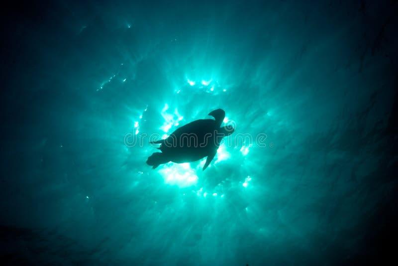 一个绿浪乌龟剪影的史诗水下的照片反对t的 库存照片