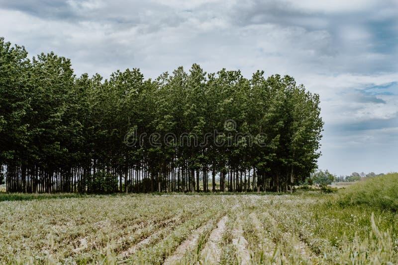 一个绿色森林的起点 库存照片