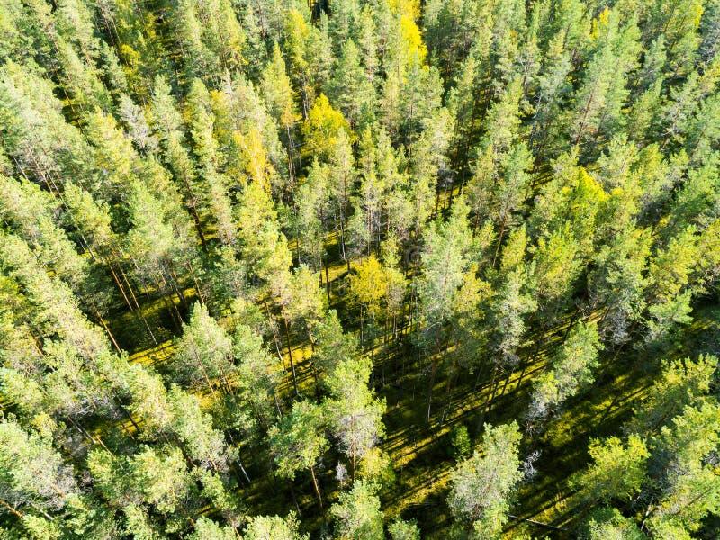 一个绿色森林美好的风景的鸟瞰图 在绿色森林空中概略的树的云彩 空中顶视图森林 免版税库存图片