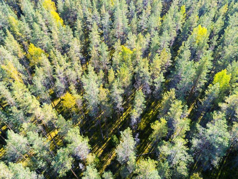 一个绿色森林美好的风景的鸟瞰图 在绿色森林空中概略的树的云彩 空中顶视图森林 库存图片