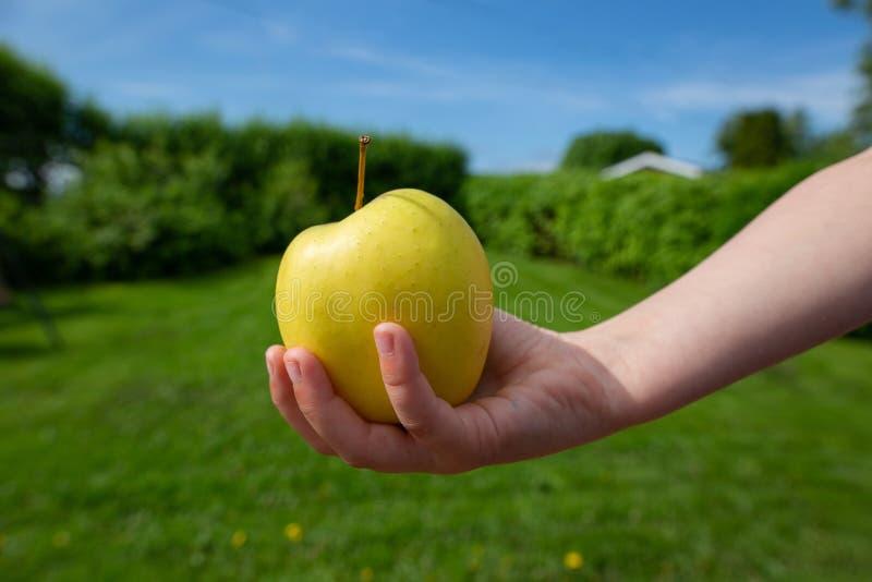 一个绿色苹果在提供援助的手上  免版税库存照片
