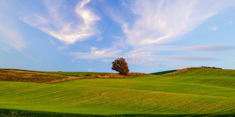 一个绿色领域的全景 免版税库存图片