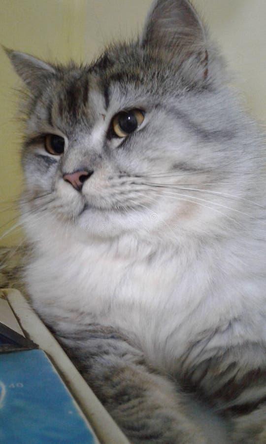 一个缺掉猫告别朋友 库存图片