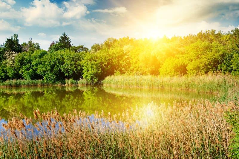 一个美丽如画的湖长满与芦苇 在蓝天brigh 库存照片