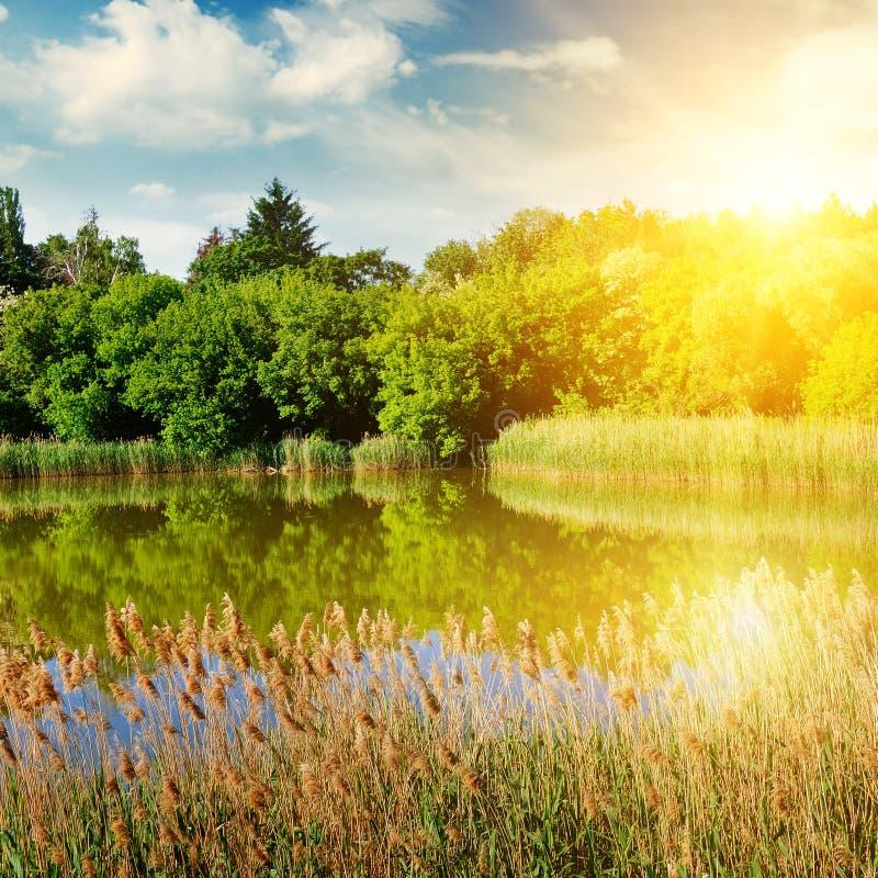 一个美丽如画的湖长满与芦苇 在蓝天brigh 库存图片