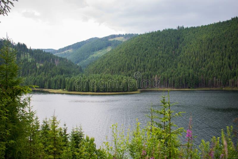 一个美丽的山湖,包围由针叶树一个大森林  在岸的许多花 一个美好的山风景 免版税库存图片