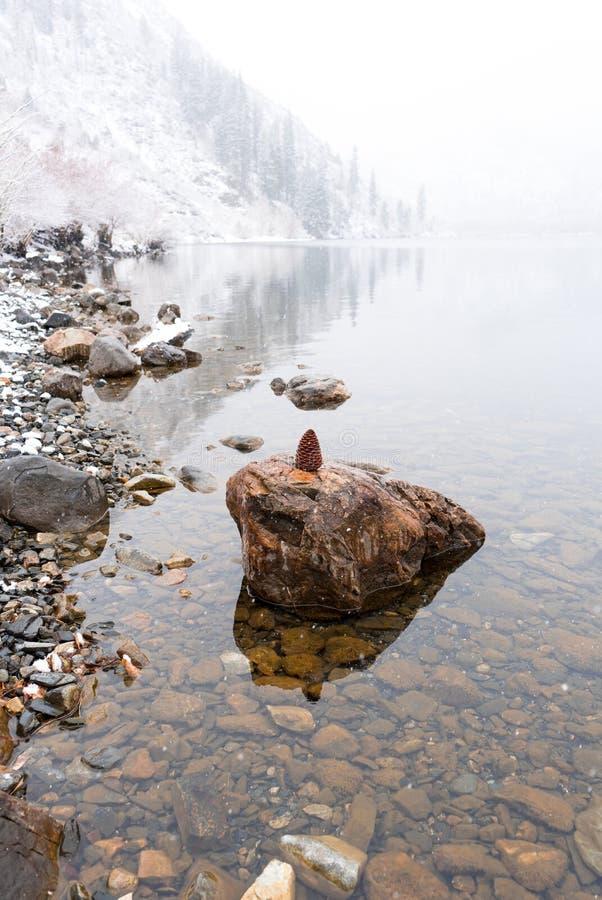 一个美丽的杉木锥体坐一个岩石在Convict湖 免版税库存图片