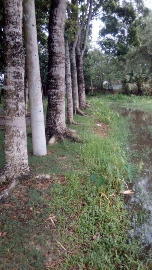 一个美好的村庄树传记 库存照片