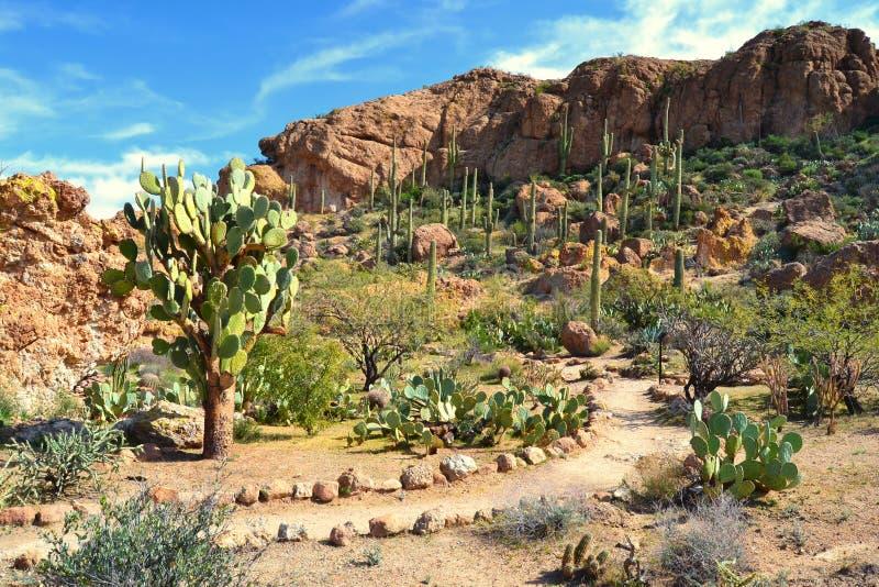 一个美好的沙漠场面 图库摄影