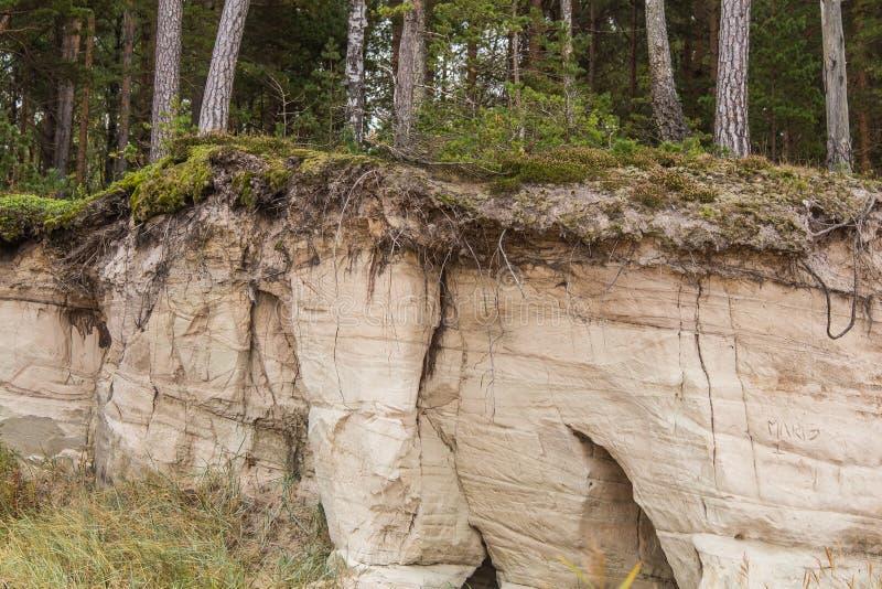 一个美好的砂岩岸风景 生长在砂岩峭壁ar波罗的海的树 与的风景洞 免版税库存照片