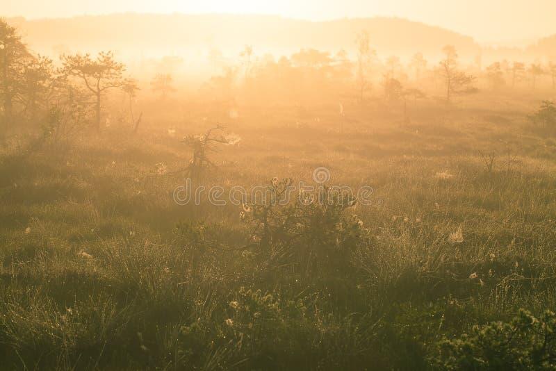 一个美好,五颜六色的日出风景在沼泽 梦想,有薄雾的沼泽风景早晨 免版税库存照片