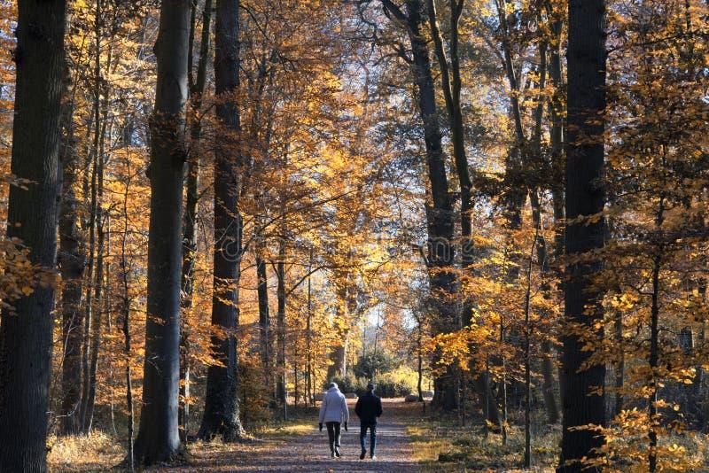 一个美妙的秋天森林风景在乌得勒支附近的荷兰  免版税图库摄影