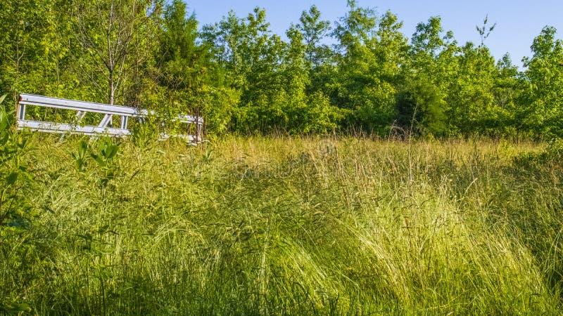 一个老庭院区域有很多长得太大的杂草和草 库存图片