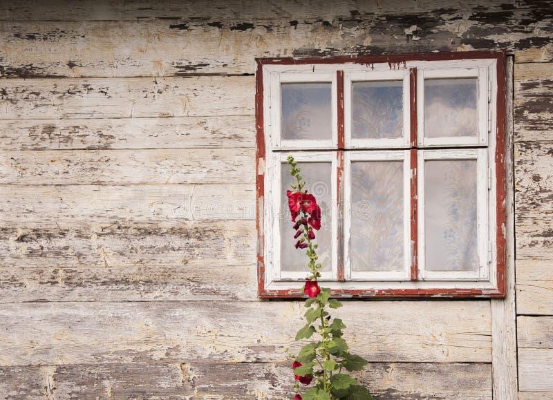 一个老木房子的窗口有红色锦葵属花卉生长的在它附近概念ethnostil 免版税图库摄影