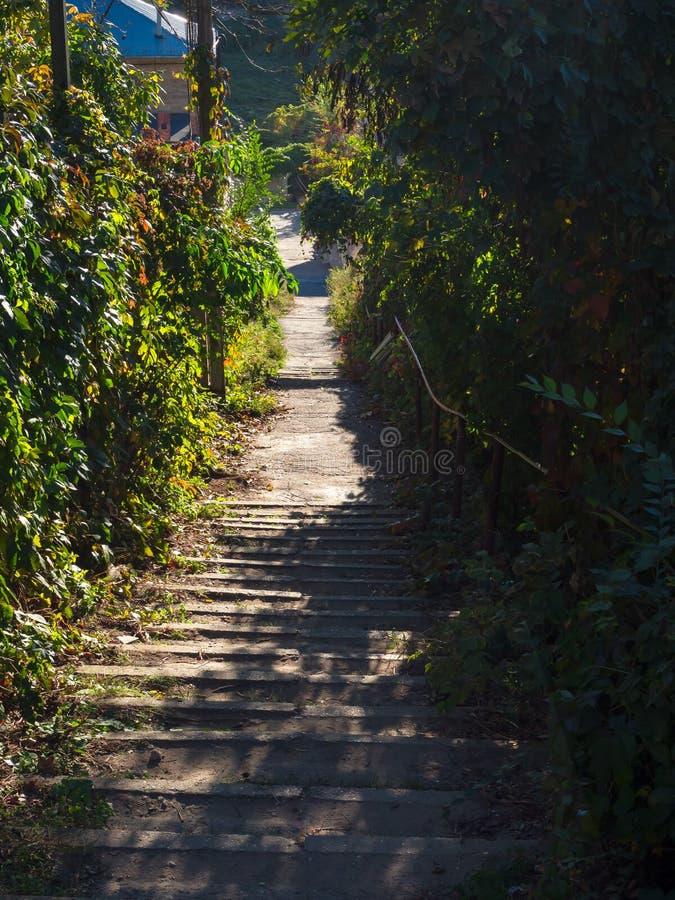 一个老楼梯下来在日落的绿色灌木中 国家道路 免版税库存照片