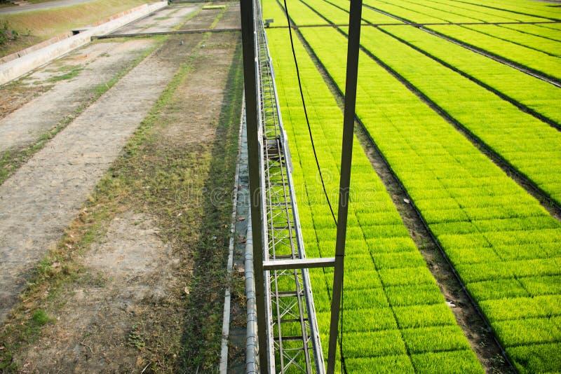 一个耕种的米领域机器 库存图片