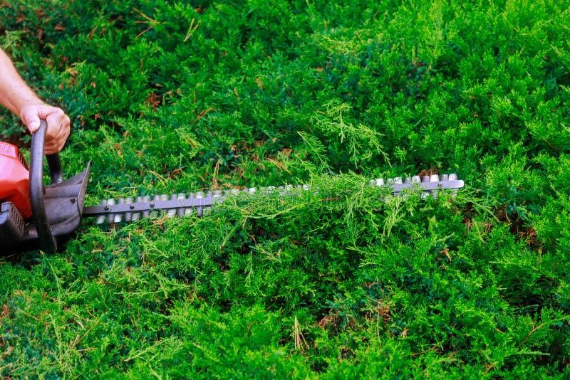 一个花匠或工作者人为装饰美丽的庭院公园使用汽油树篱修剪机机床切削 库存图片