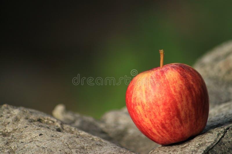 一个苹果 免版税图库摄影