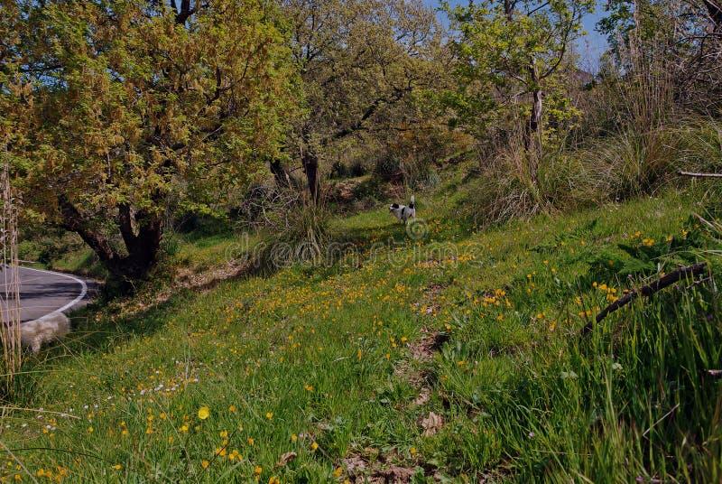 一个草甸在春天在路的 免版税库存图片