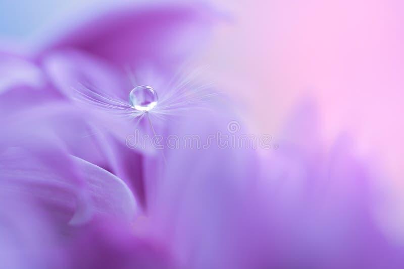 一个蒲公英的种子与水下落的在紫色花 在美好的背景的宏观蒲公英 选择聚焦 免版税图库摄影