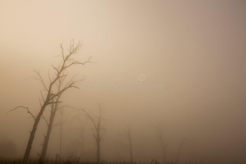 一个薄雾被填装的早晨 免版税图库摄影