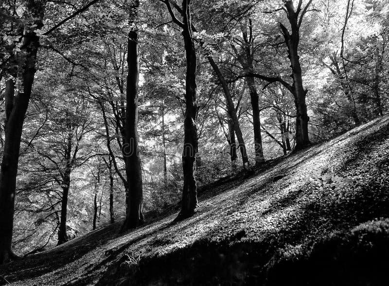 一个被日光照射了森林的大反差单色图象陡峭的倾斜的小山的与暗影 免版税图库摄影