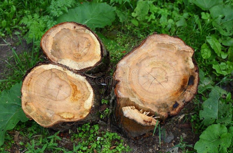 一个被锯的树干的树桩 库存图片