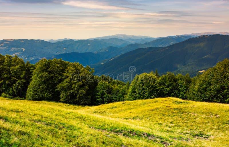 一个象草的草甸的森林山的 免版税库存照片