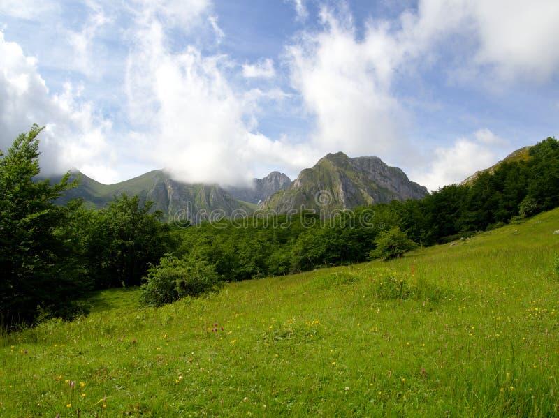 一个豪华的森林包围的美丽的高山草甸在山的脚 库存图片