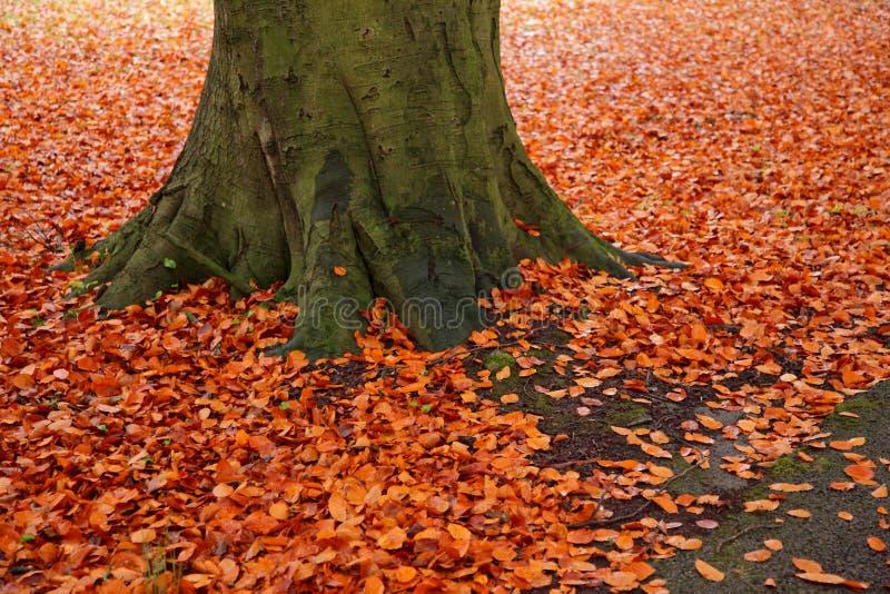 一个道路方式在秋天 免版税库存照片