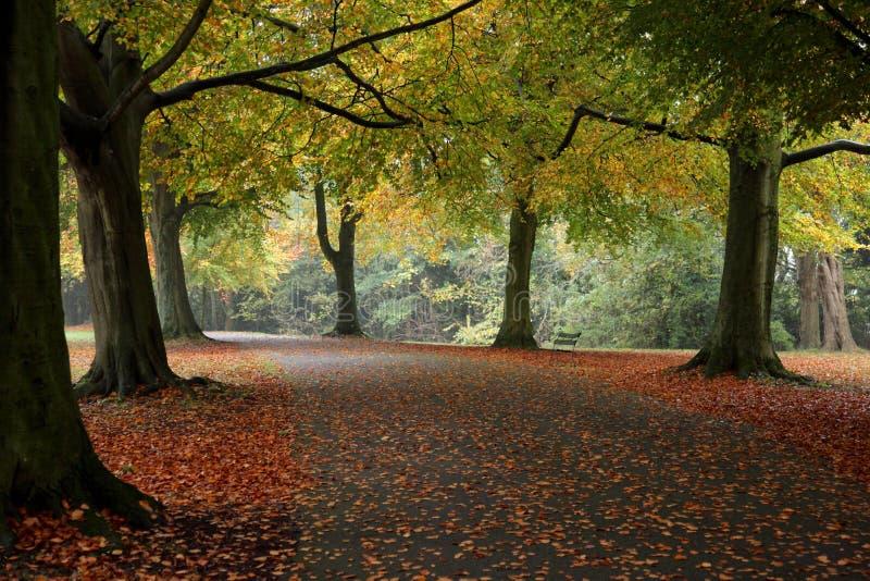 一个道路方式在秋天 库存照片