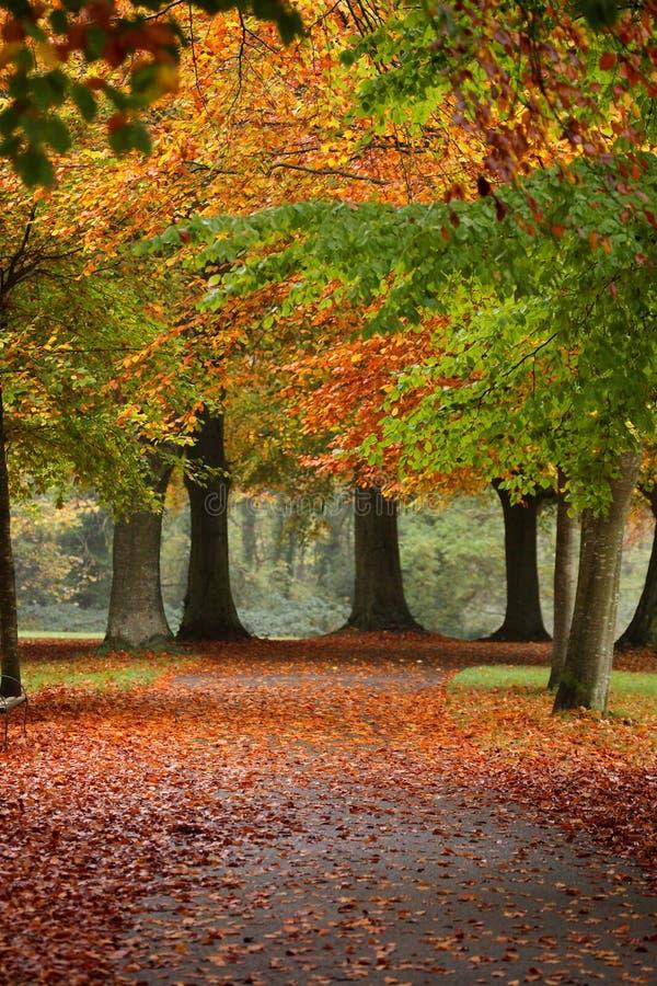一个道路方式在秋天 免版税库存图片