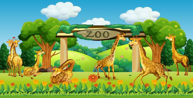 一个长颈鹿家庭在动物园里 皇族释放例证