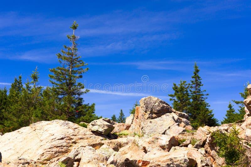 一个陡峭的石倾斜的充满活力的植物 库存图片