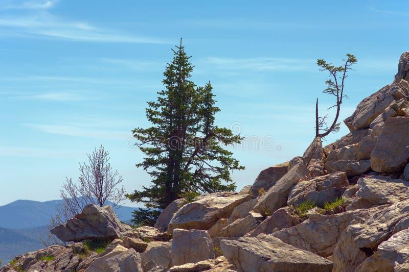 一个陡峭的石倾斜的充满活力的植物 库存照片